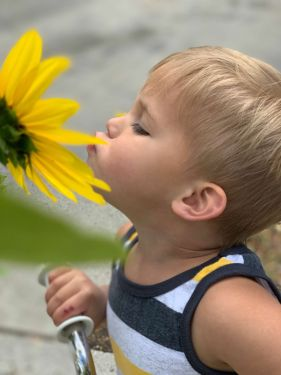 An image of a boy smelling a large yellow flower